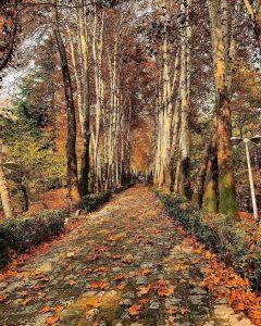پارک جمشیدیه در پاییز