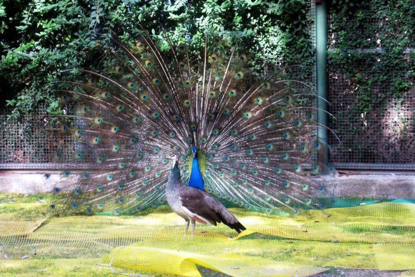 باغ پرندگان استان کرج